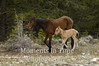 New foal with mare