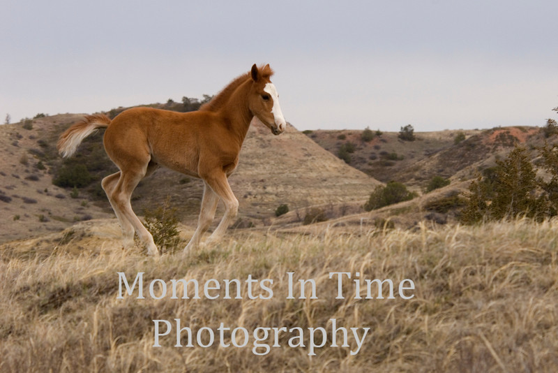 Badlands foal