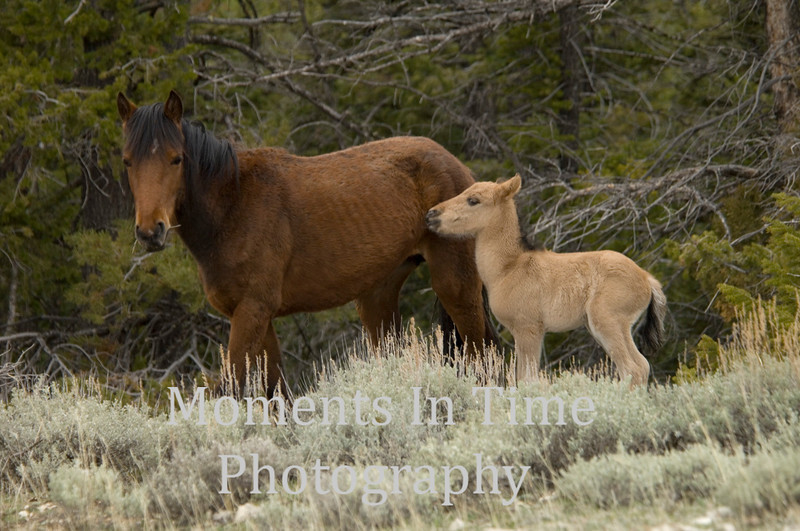 New foal with bay mare