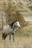 Wild mare V