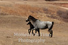 Badlands mare with foal