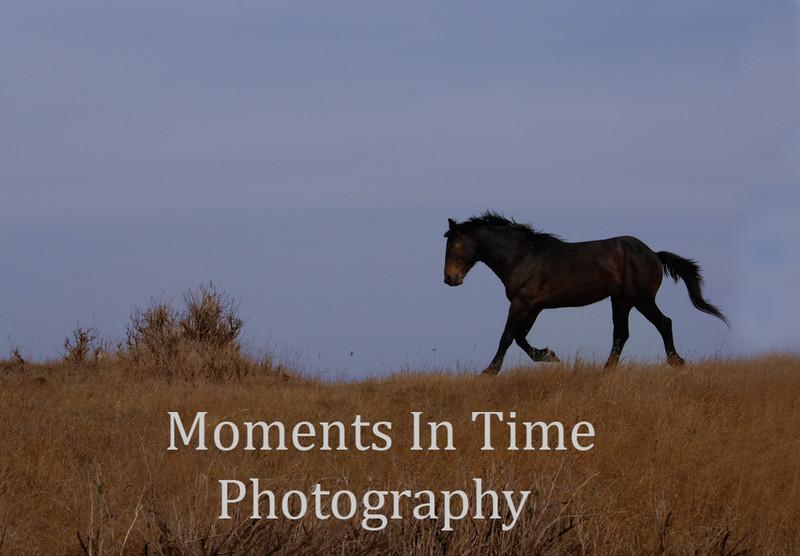 Badlands wild horse no border