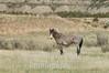Prior wild stallion