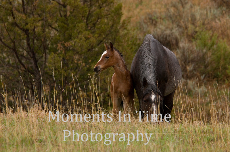 Foal with mare on hill