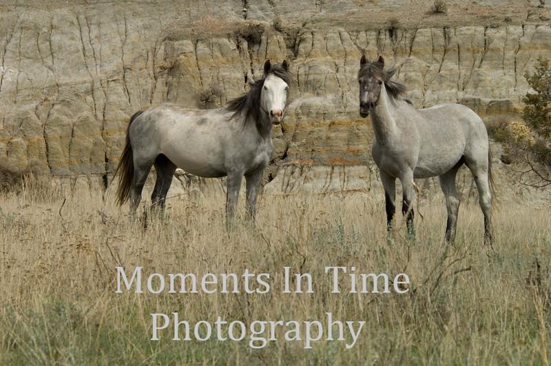 Wild horse beauties
