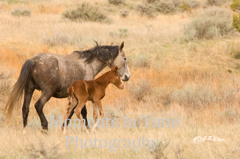 Mare and foal moving on