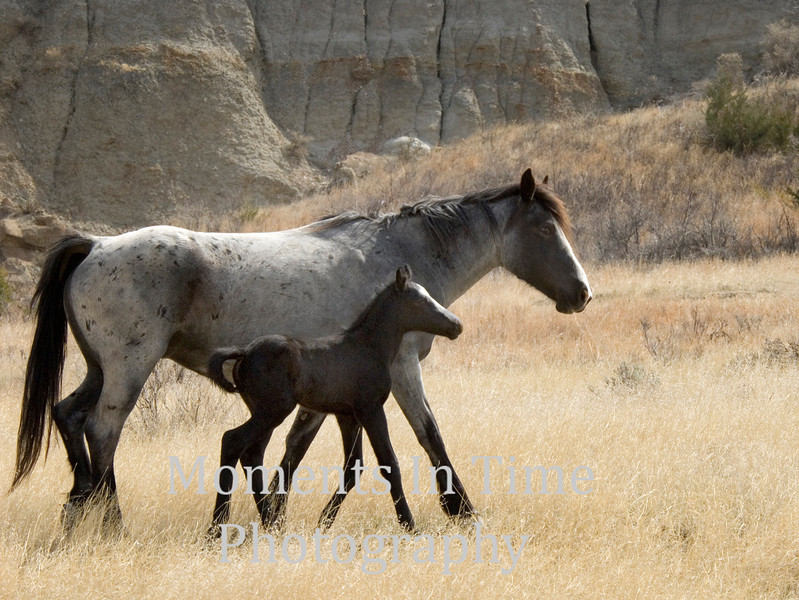 Dappled gray with foal
