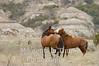 Stallion standoff