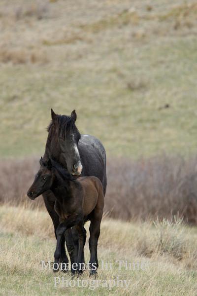 Dark mare dark foal v