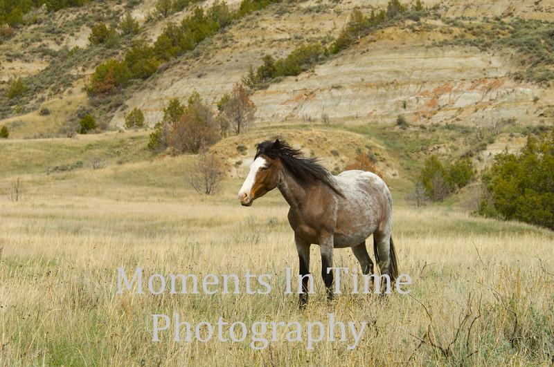 Badlands mare