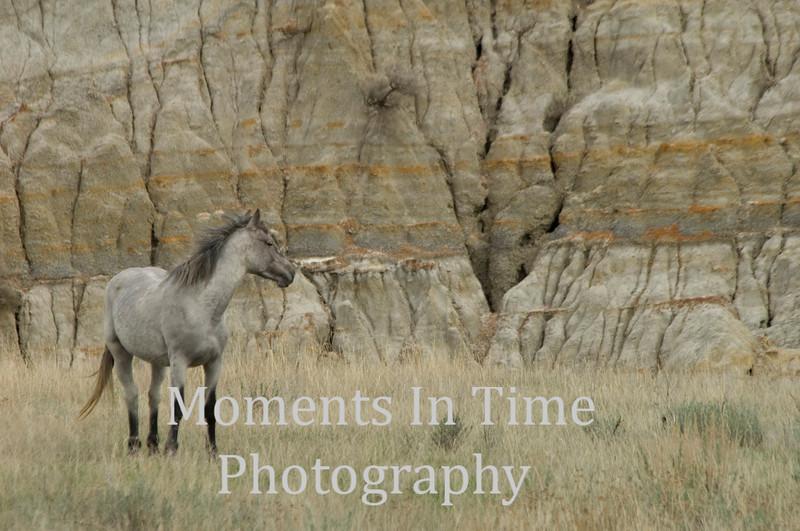 Gray mare in Badlands