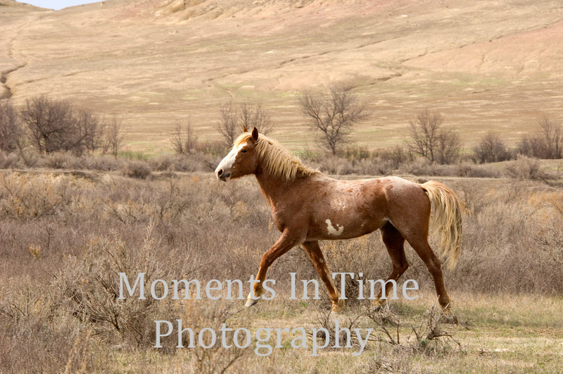 Golden beauty in Badlands