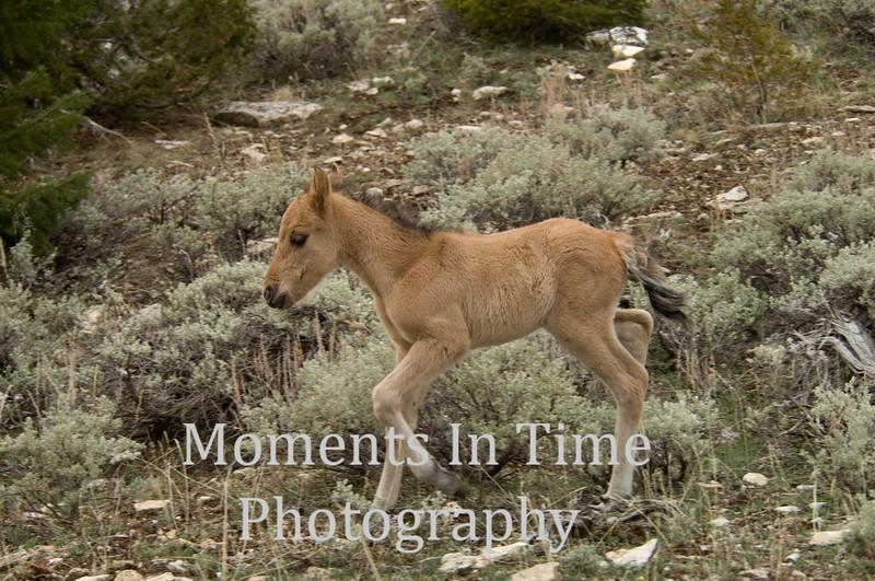 New wild foal