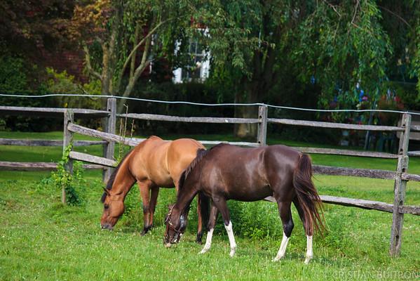 Horses Day 2