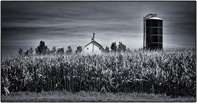 Corn Field  08 18 12  012