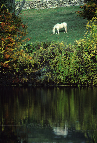 White horse reflected in Autumn Pond - Canadensis, Pocono Mts., PA