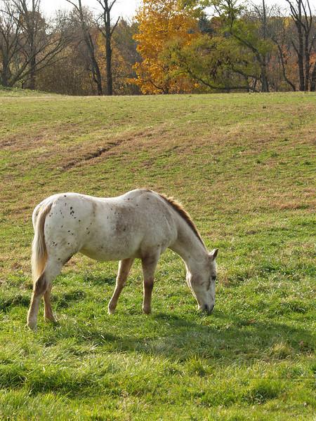 Horse in Autumn; Springtown, PA