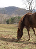 Horse in Fairview, NC