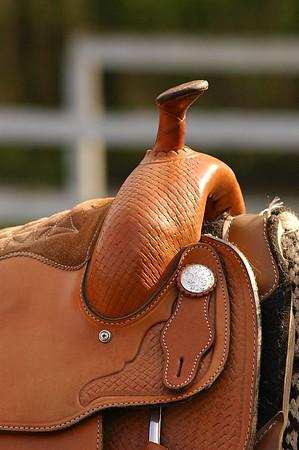 Horses Upstate NY