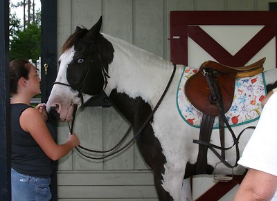<font size = 3><b><font color = saddleBrown><i>More Pony Photos for the TV shows...</font></font></font>