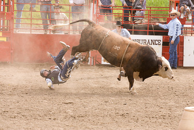 Bucking bull loses his cowboy