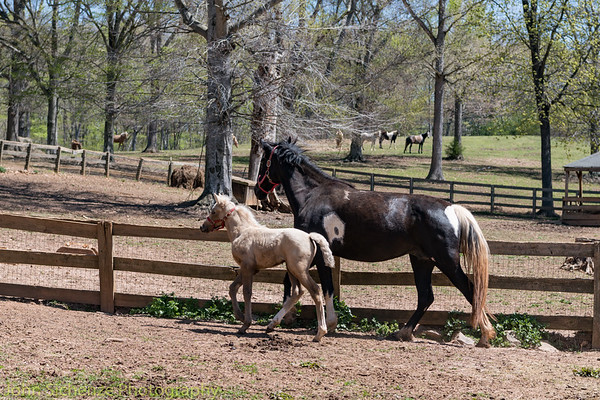 Horses in Powhatan