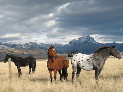 Horses of Madison Valley, Montana