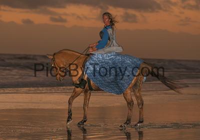 Horses on Crescent Beach, FL on Nov 11-12., 2017