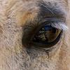 DC's eye 2006