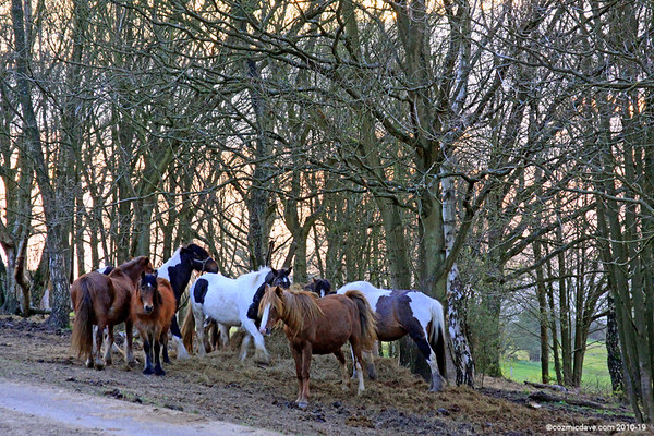 Horses on May Hill (April 2010)