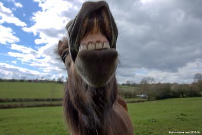 Pony at Trelleck 09