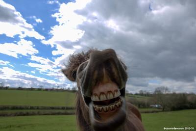 Pony at Trelleck 13