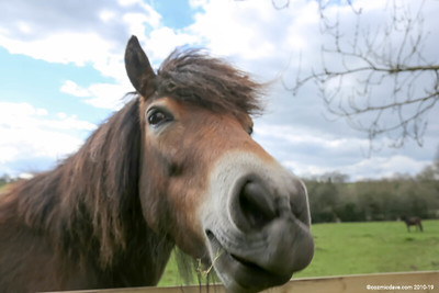 Pony at Trelleck 05