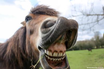 Pony at Trelleck 07