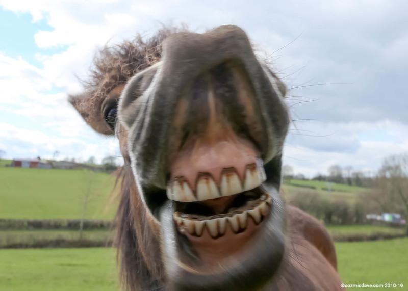 Pony at Trelleck 02