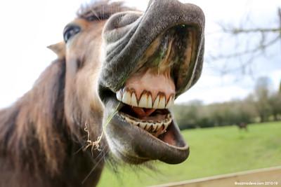 Pony at Trelleck 08