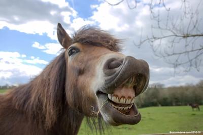 Pony at Trelleck 01