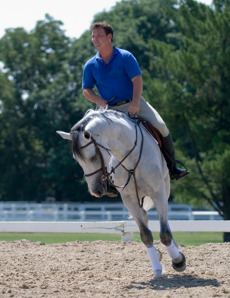 saturnia horse show 186-105