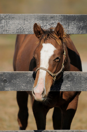 foals at fence in paddock