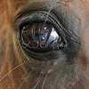 HorseEye3794