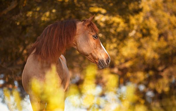 Horses at home