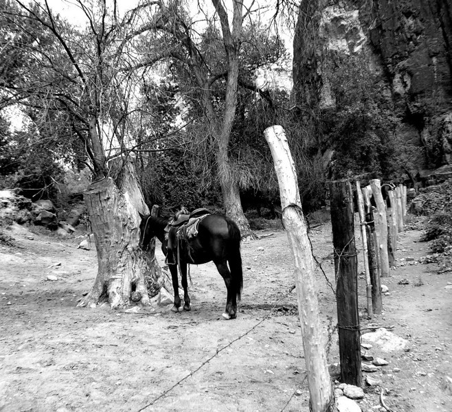 Lone Horse - This horse was photographed at the bottom of the Grand Canyon at Havasu Falls.  It was one of the most beautiful places I have ever had the pleasure of visiting. Havasu Falls, AZ