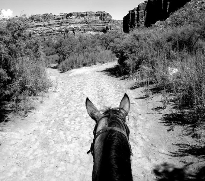 Riding - This was photographed at the bottom of the Grand Canyon. We were on our way to Havasu Falls.