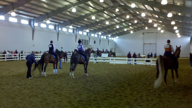 """Gina & Dexter and Heather & Hooper (left two riders & horses) waiting to perform in Class 37, Academy Pleasure. Nancy, their trainer is faithfully """"backing"""" them up."""