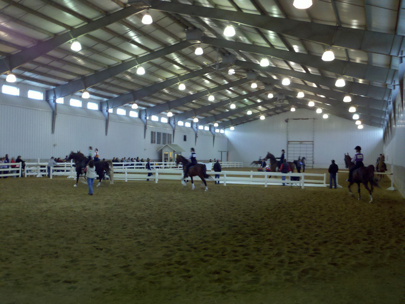 You can't make them out too well, but the front three riders (left to right) are Parker (on Amos), Gina (on Dexter) and Heather (on Hooper). Warming up for Class 37, Academy Pleasure.