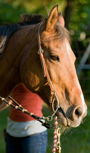 Horses-20