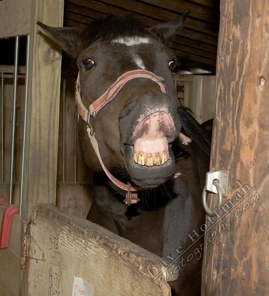 Horses-31