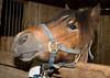 Horses-33