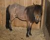 Horses-34