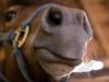 Horses-6